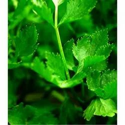 Pan India Organic Celery, Pesticide Free (for Raw Products)