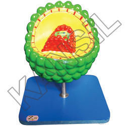 AIDS Virus For Histology & Biomolecules Model