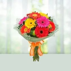 Gerbera Flower In Bengaluru Latest Price Mandi Rates From Dealers In Bengaluru