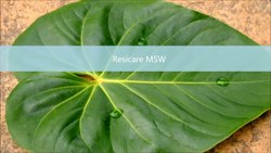 Bio-Tech Grade Packaging Size: 50 Kg Resicare MSW, For Agriculture, Target Crops: Vegetables