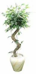 Arificial Varigated Ficus