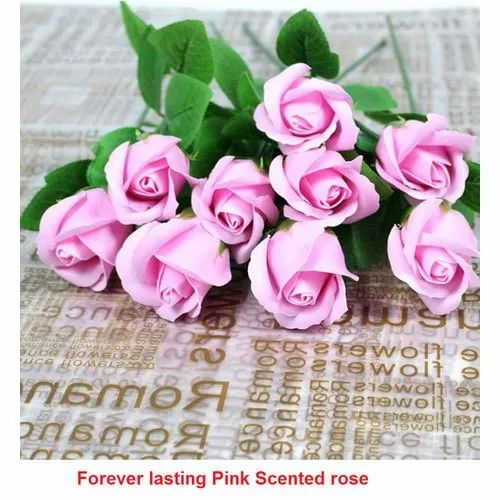 Pink Scented Rose