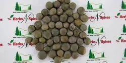 Gataran - Sagargota - Karanjwa Seeds - Caesalpinia bonduc - Latakaranja