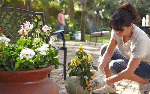 Plants Rental Services