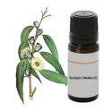 Organic Eucalyptus Citriodora Terpens Oil