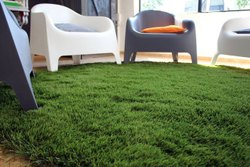 Original Carpet Grass