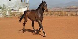 Horse Riding Service