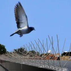 Bird Spike