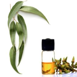 Pale Yellow Steam Distillation Eucalyptus Oil