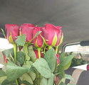 Dutch Roses Fresh Flowers