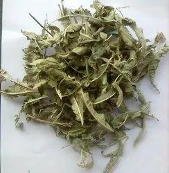 Lemon Verbena - Aloysia Citrodora Leaves
