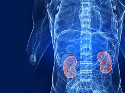 Urology Treatments Services