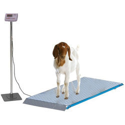 Goat Weighing Machine