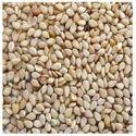 Sesame Seeds Cold Storage Rental Services