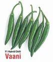Kgp Seeds Green Chilli - Vaani