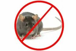 One time, Monthly and Yearly One Month, 3 Months And Yearly Rodent Control Service