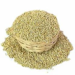 Domestic Pearl Millet