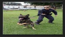 Squad Training Services