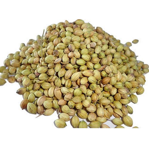 Mandesh 6 Months Organic Coriander Seeds, Packaging Size: 100gm - 100 Kg, PP Bag,PP Pouch