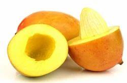 Virgin Mango Seed Carrier Oil