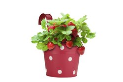 Flower Pot Iron Round Hook Railing Polka Dots Planter