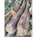 Harvested Teak Wood