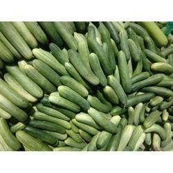 Cucumber Cold Storage Rental Service