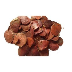 Palash - Butea Monosperma - Tesu Seeds