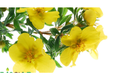 India Pure Evening Primrose Oil, For Therapeutic