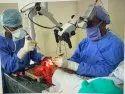 Microvascular Surgery