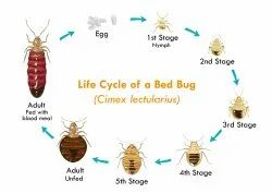 Monthly Bed Bug Treatment, in Delhi