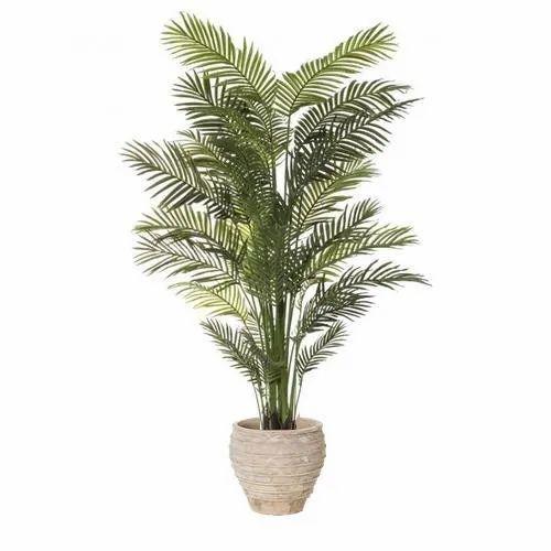 Indoor Decorative Plant At Rs 300 Piece घर म लग न क ल ए प ध अ दर रखन क प ध इनड र प ल ट स इ ड र प ल ट Shree Swami Samarth Nursery And Garden Pune Id 21341687391