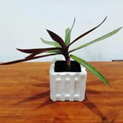 Outdoor Ceramic Square Flower Pot