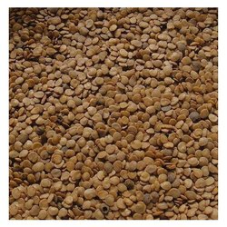 VAI - Hybrid Brinjal Seeds, Pack Type: Plastic Bags