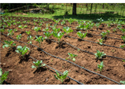 Drip Irrigation Set
