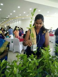 Mix Gift Plant With Gift Pack Of 100