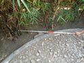 Snake Catcher Stick