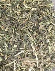 Natural Dry Solanum Nigrum Makoy, for Ayurvedic