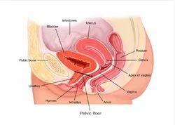 Urogynecology Female Urology Treatment Service