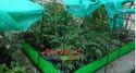 Concrete Juggle Organic Farming