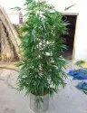 Artificial Bamboo Shoot 4 To 10 Feet