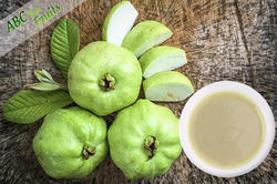 ABC Fruits Organic White Guava Concentrate, Packaging Type: Drum, Packaging Size: 220 Kgs