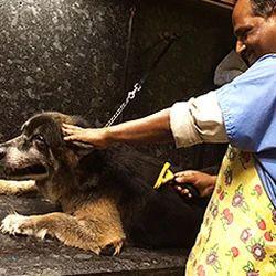 Pet Grooming Scissor Services