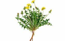 Dandelion Extract