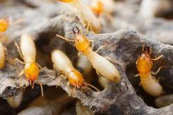 Home Termites Control Service