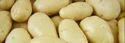 Pale Yellow Fresh Potato