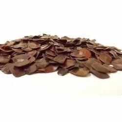 Amaltas Seeds