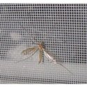 Fiberglass Mosquito Mesh