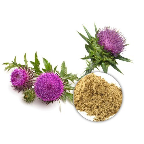 Water Soluble Milk Thistle Extract, Packaging Size: 25 Kg, Rs 2800 /kg    ID: 22253568397