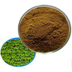 Ivy Leaf Extract - Hedera Nepalensis